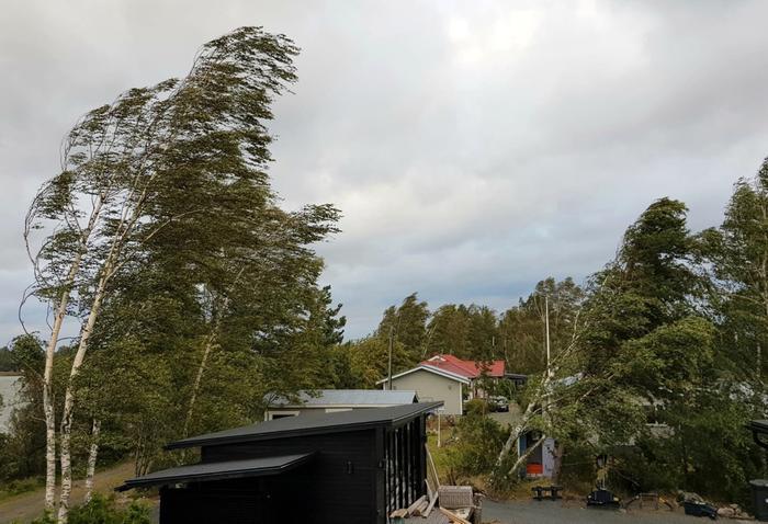 Aila-myrsky riepotteli puita länsirannikolla.