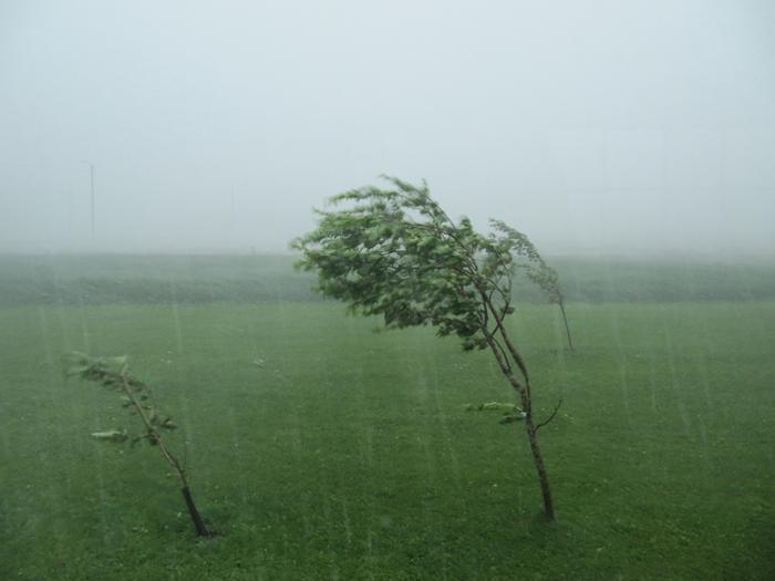Rajuilma riepotteli omenapuita Etelä-Pohjanmaalla heinäkuussa 2011.