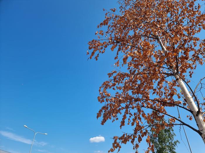 Kuiva sää näkyy jo luonnossa erityisesti maan etelä