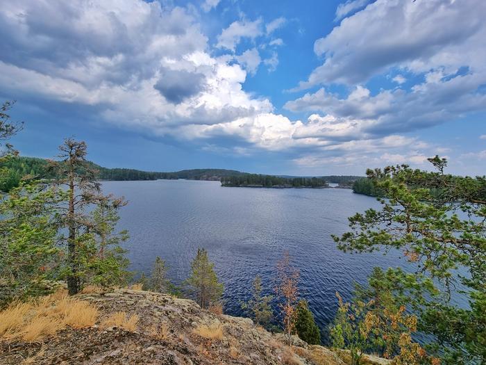 Kuivuuden ja kuumuuden seuraukset näkyvät luonnossa eri puolilla Suomea.