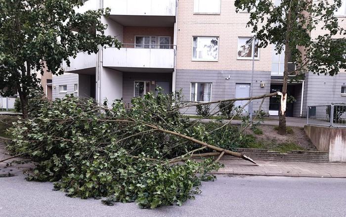 Syysmyrsky Aila oli kaatanut puun Turun Runosmäessä.