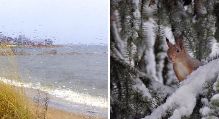 Vesisateita rannalla ja orava lumisissa tunnelmissa.