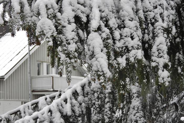Lunta satoi Jyväskylässä toukokuussa 2020.