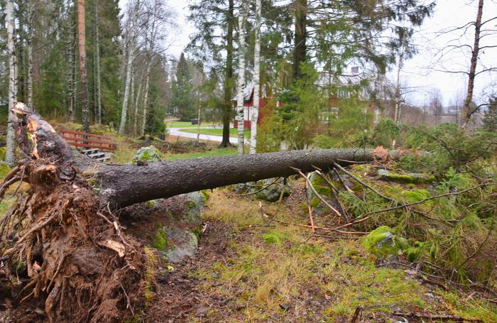 Liisa-myrskyn tuhoja Isossakyrössä.