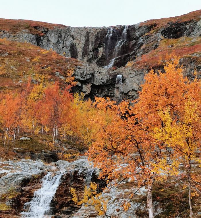 Ruskan värjäämät puut Kitsiputouksella.