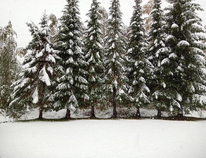 Maa ja puut peittyivät lumeen Kemissä syyskuussa 2021.