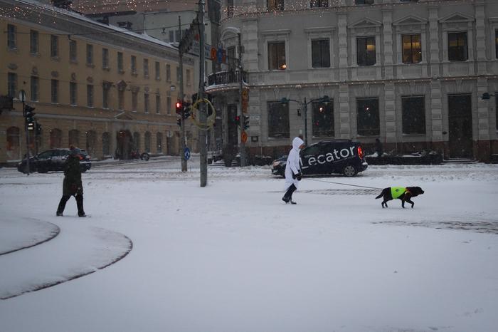 Koiraa ulkoilutetaan lumimyrskyssä