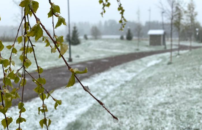 Lunta satoi Tuusulassa toukokuussa 2020.