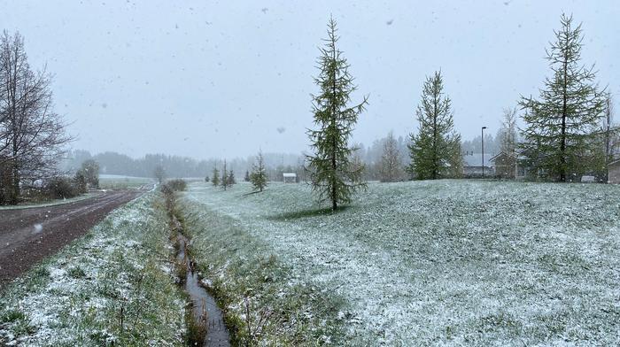 Lumisateita Tuusulassa toukokuussa 2020.