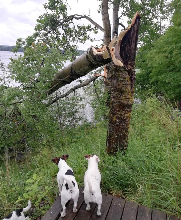Päivö-myräkkä katkaisi puun Kontiolahdella.