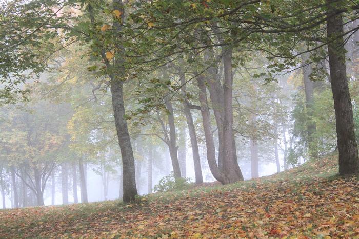 Syksyisin puistot ja metsät voivat peittyä sumuisiin maisemiin.