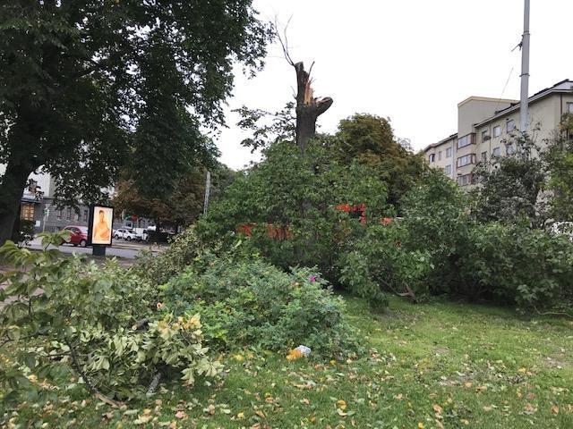 Aila-myrskyn tuhoja Hesperianpuistossa Helsingissä.