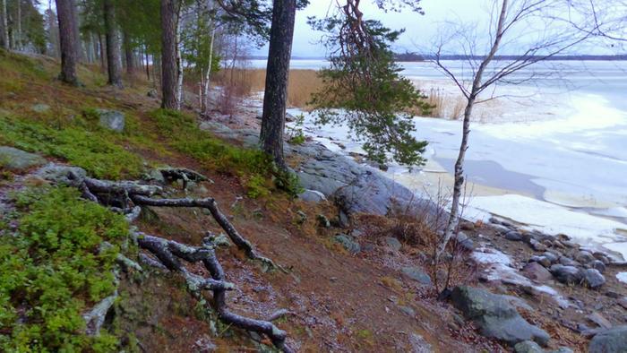 Lauhaa ja lumetonta joulukuun säätä Vaasassa.