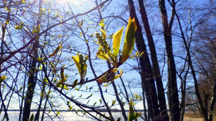 Aurinkoinen kevätpäivä Vaasassa.