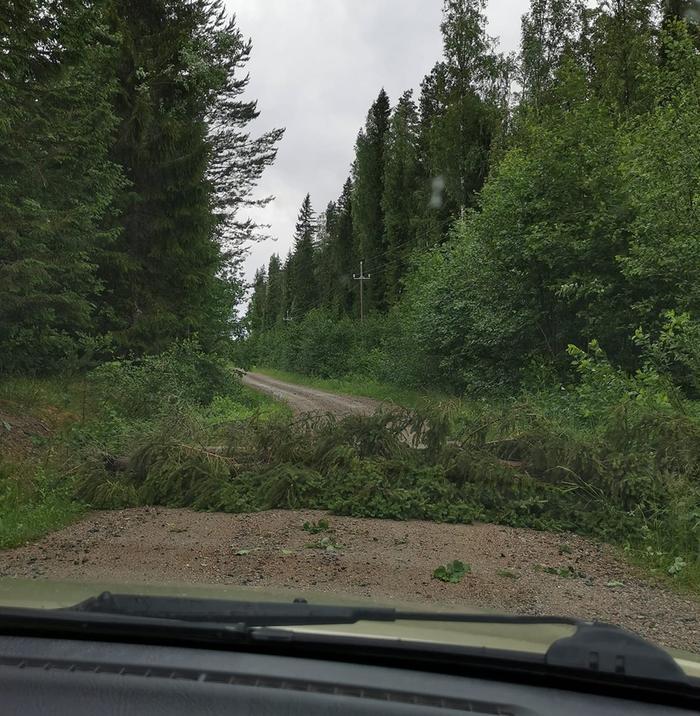 Puu katkesi tielle Päivö-myräkässä Enonkosken Ihamaniemellä 30. kesäkuuta 2020.