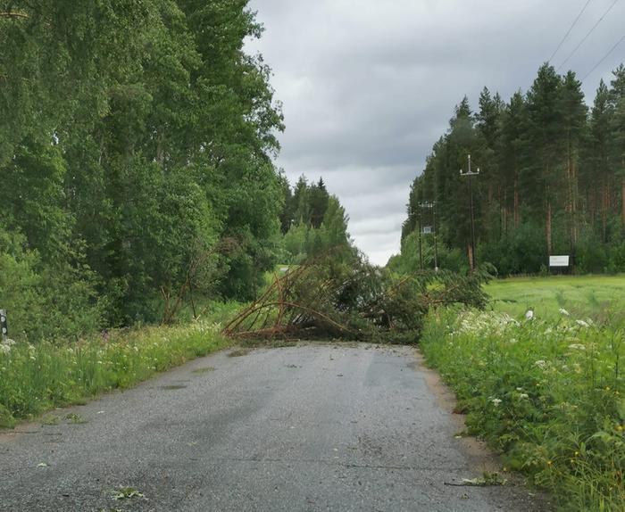 Päivö-myräkkä kaatoi puun tielle Enonkosken Ihamaniemellä 30. kesäkuuta 2020.