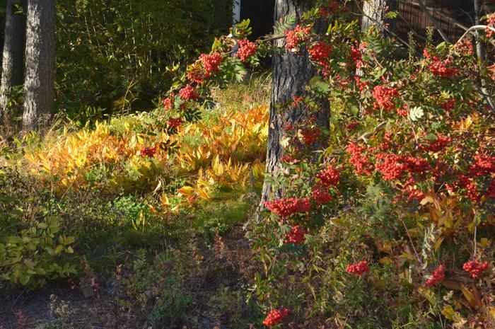 Kasvillisuus vaihtaa väriä ensin lähellä maanpintaa.