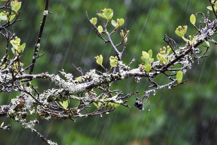 Tuulet voimistavan matalapaineen reitissä voi vielä tulla muutoksia, mutta sateet ovat todennäköisesti saavuttamassa Suomen joka tapauksessa.