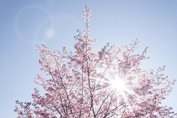 Maalis–toukokuu näyttää pitkän sääennusteen perusteella suuressa osassa Suomea tavanomaista lämpimämmältä.