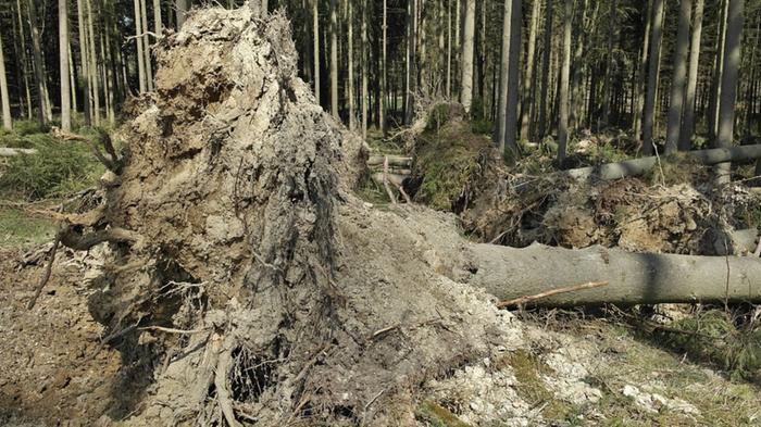 Konvektiivisiin säätapahtumiin liittyvät voimakkaat tuulen puuskat (yli 25 m/s) voivat kaataa puita ja aiheuttaa muutakin vahinkoa.