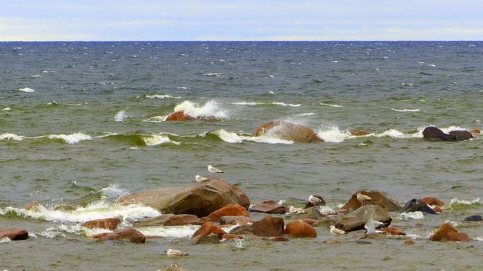 Tuuli voi viikonloppuna yltyä myrskyksi asti Suomenlahdella. Uusimmissa ennusteissa myrskypuuskien riski on yhä olemassa etelä- ja lounaisrannikolla.