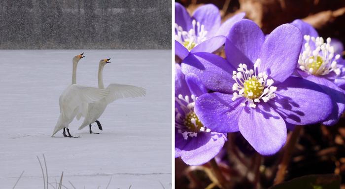 Vaihteleva sää on tyypillistä Suomen keväässä.