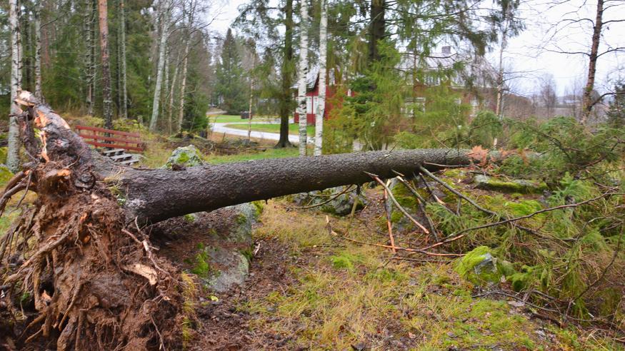 Vuosi 2020 on ollut Suomessa myrskyisä – Liisa-myrsky mukaan lukien jo 40 myrskypäivää