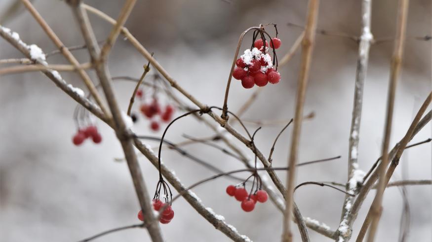 Lämpöä etelään, lisää lunta pohjoiseen: Matalapaine pyyhkäisee pian maan poikki sateineen – loppuviikolla saumaa poutaisiin pakkaspäiviin?