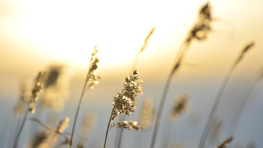 Vilpoisan loppuviikon jälkeen otetaan jälleen suunta kohti keväistä lämpöä – mitataanko kohta jopa +15 astetta?
