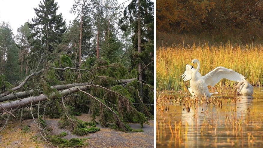 Syyskuun sää yllätti: Aila oli poikkeuksellisen voimakas syysmyrsky – kuun lopussa lämpöennätykset paukkuivat