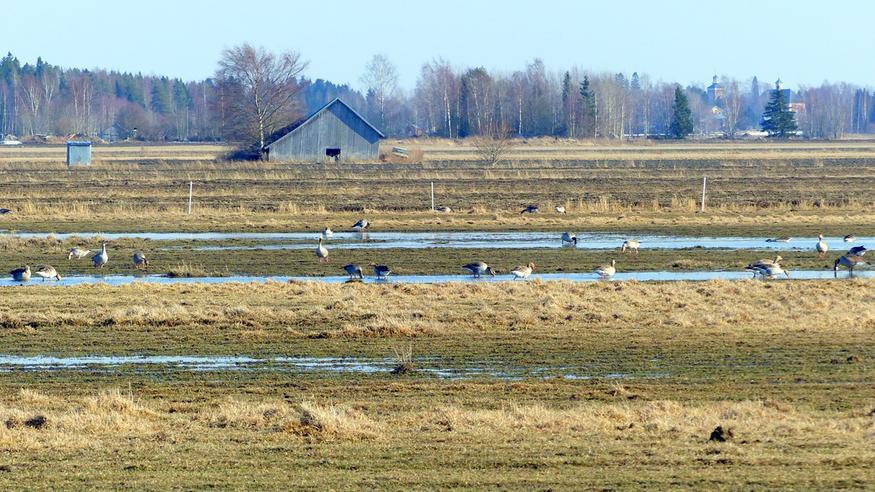 Lunta vielä eteläänkin – ensi viikolla föhn-tuuli puhkuu kevättä