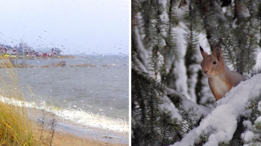 """Uusi kuukausiennuste: Tällainen on syyslomien ja marraskuun alun sää – """"Osaan maata odotettavissa jo varsin talvista"""""""
