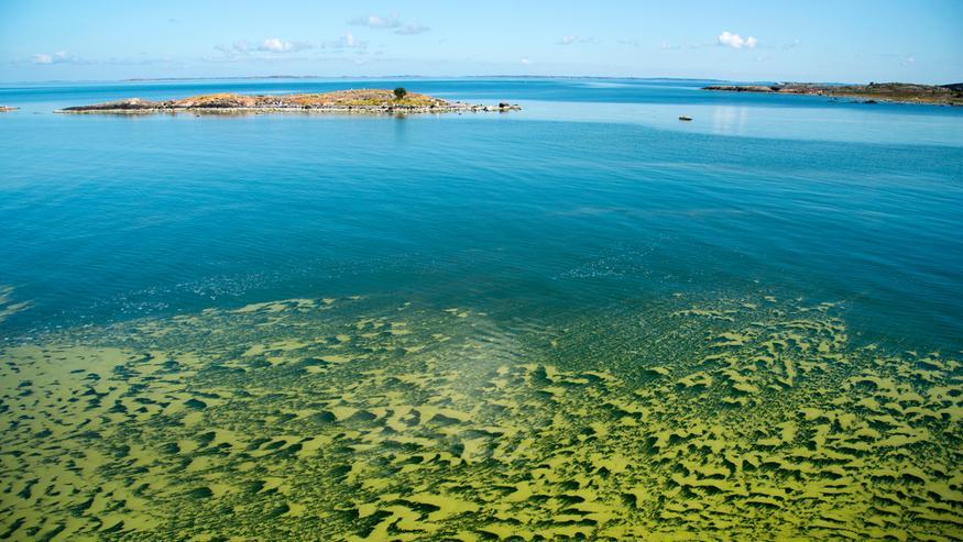 Kesän sinileväennuste: Näillä merialueilla riski on huomattava – katso kartta