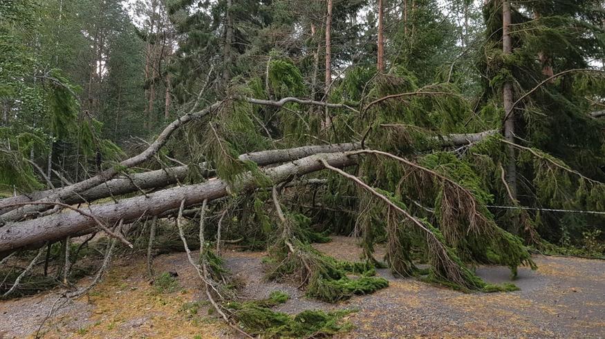 """Aila-myrsky nyt: Illalla voimakkaimmat tuulet etelässä ja idässä, """"40 puuta kaatunut ristiin rastiin"""" – katso kuvat, tilanne ja ennuste!"""