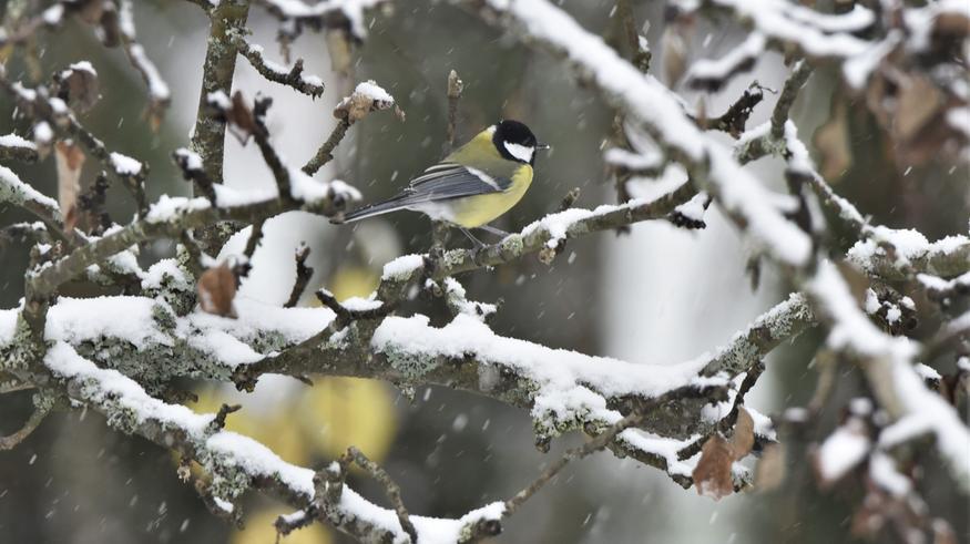 Viikon vaihtuessa sadesäätä ja voimistuvaa tuulta – Lappiin jälleen lumipyry