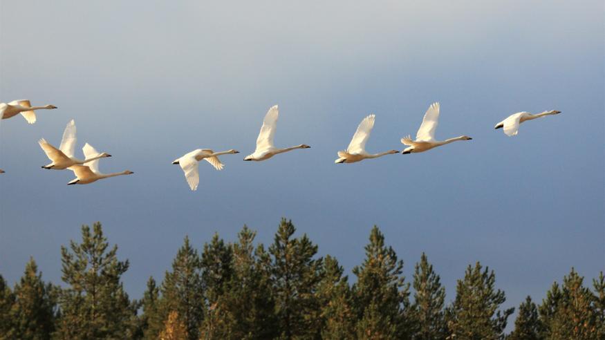 Kylmä pohjoisvirtaus sai linnut liikkeelle: Edessä öisiä pakkasia ja poutapäiviä – käänne säätyyppiin ensi viikolla