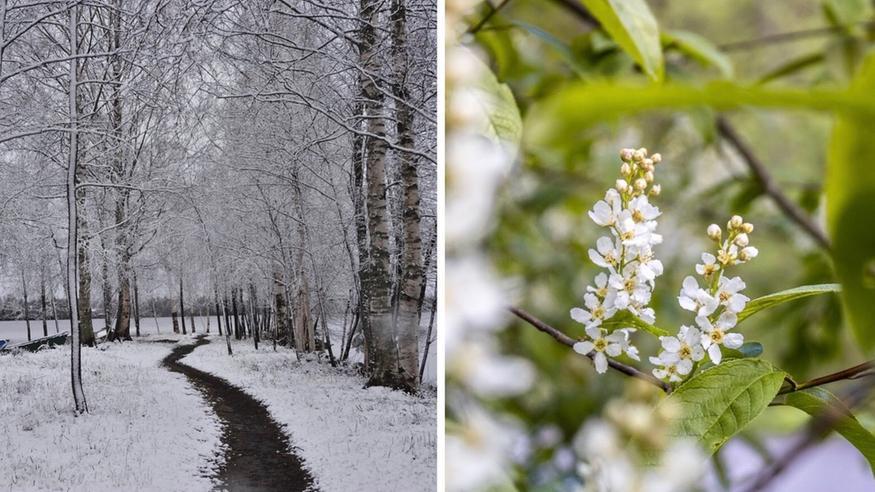 Toukokuu oli tavallista kylmempi, Lapissa metrin lumihankia: Parissa viikossa takatalvista kesään – katso kuvat!