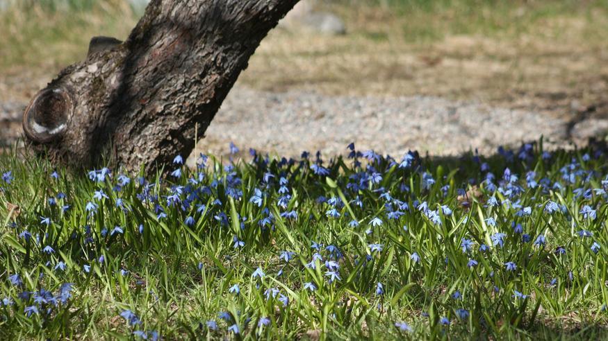 Tuore kuukausiennuste: Kesäsää pamahtaa pian päälle – tältä näyttää toukokuun lopun tilanne