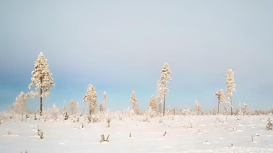 15 Vrk Sää Rovaniemi