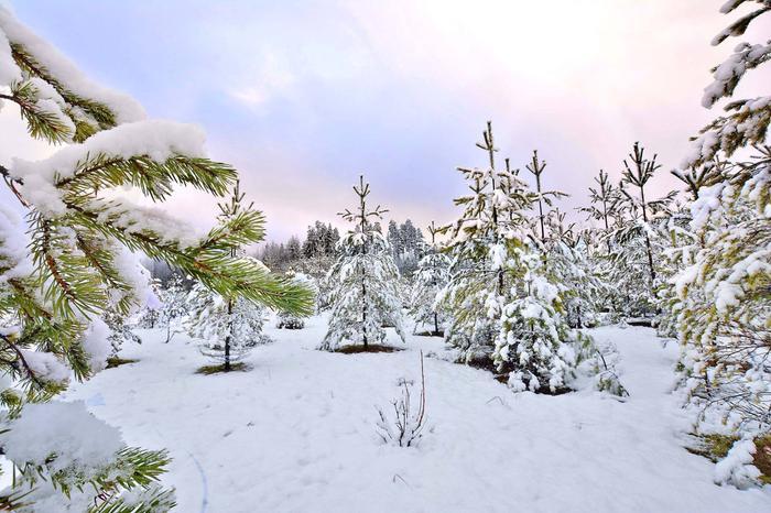 Ensilumi Etelä-Suomessa marraskuussa. Ensilumen määritelmä täyttyy, jos aamun mittauksissa lunta on vähintään 1 cm.