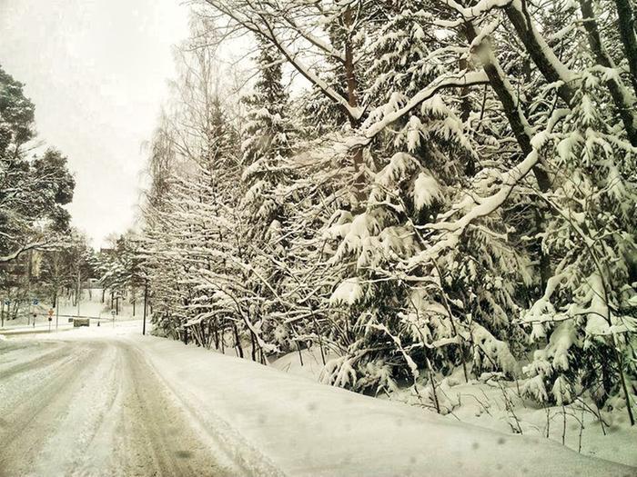 Lumen paino voi taivuttaa oksia