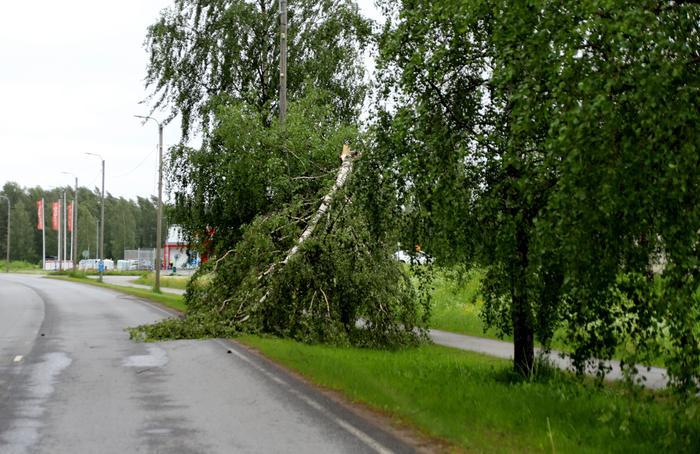 Vieno-myrsky on katkonut puita ja aiheuttanut sähkökatkoja eri puolilla Suomea.