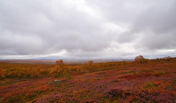 Maaruskaa Karigasniemellä pilvisenä päivänä.