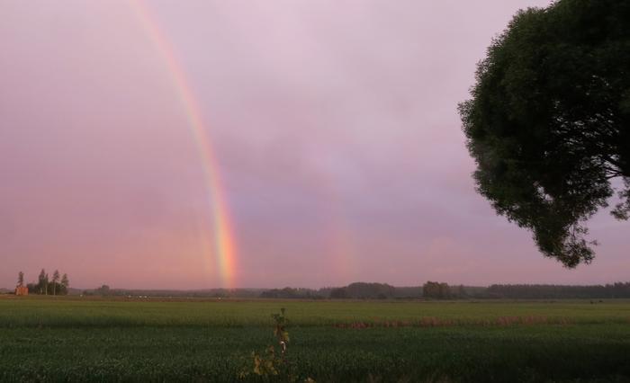 Auringonlaskun aikaan sateenkaari on punaisempi. Kuvassa näkyy myös interferenssikaaria varsinaisen sateenkaaren sisäpuolella sekä hyvin heikko sivusateenkaari.