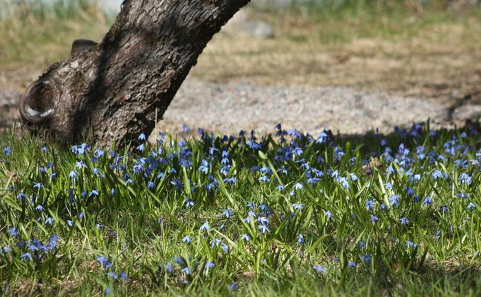 Keväistä kukkaloistoa.